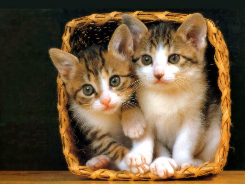 Haiwan cute in the house! Cats001